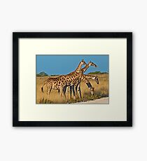The right timing... Framed Print