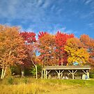 Colors Of Fall by Martha Medford