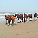 Wild Horses of the Outer Banks by Jack Ryan