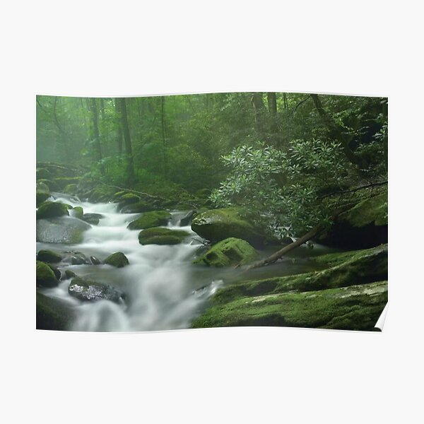 Roaring Fork River Flowing Through Forest In Great Smoky Mountains National Park Poster