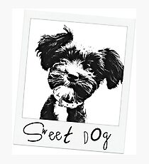 Sweet Dog Photographic Print