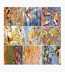 Rainbow Bark Photographic Print