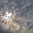 A Sudden Sunburst by Jane Neill-Hancock