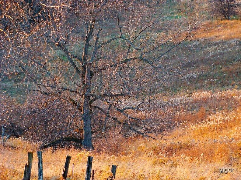 Sunlight in November Fields by vigor