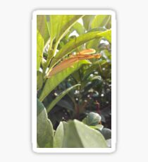Brown Praying Mantis Sitting in the Foliage Vertical Sticker