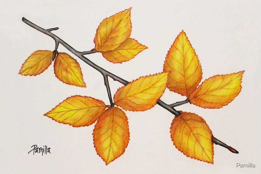 Autumn Lights by Parnilla