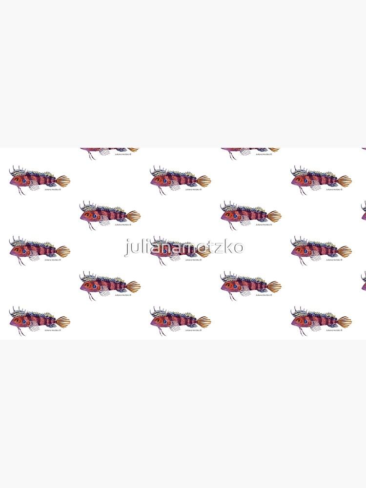 Quillfin Blenny Fish by julianamotzko