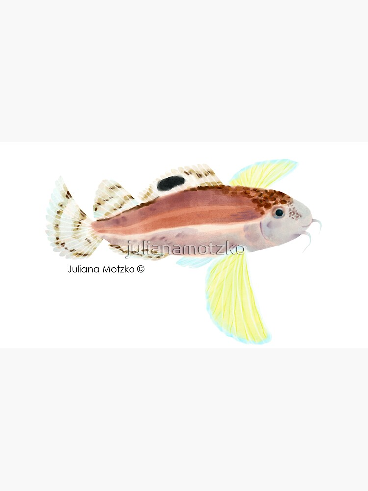 Ocellated Waspfish by julianamotzko