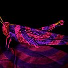 Purple Hopper from planet Zorg  by Heather Friedman