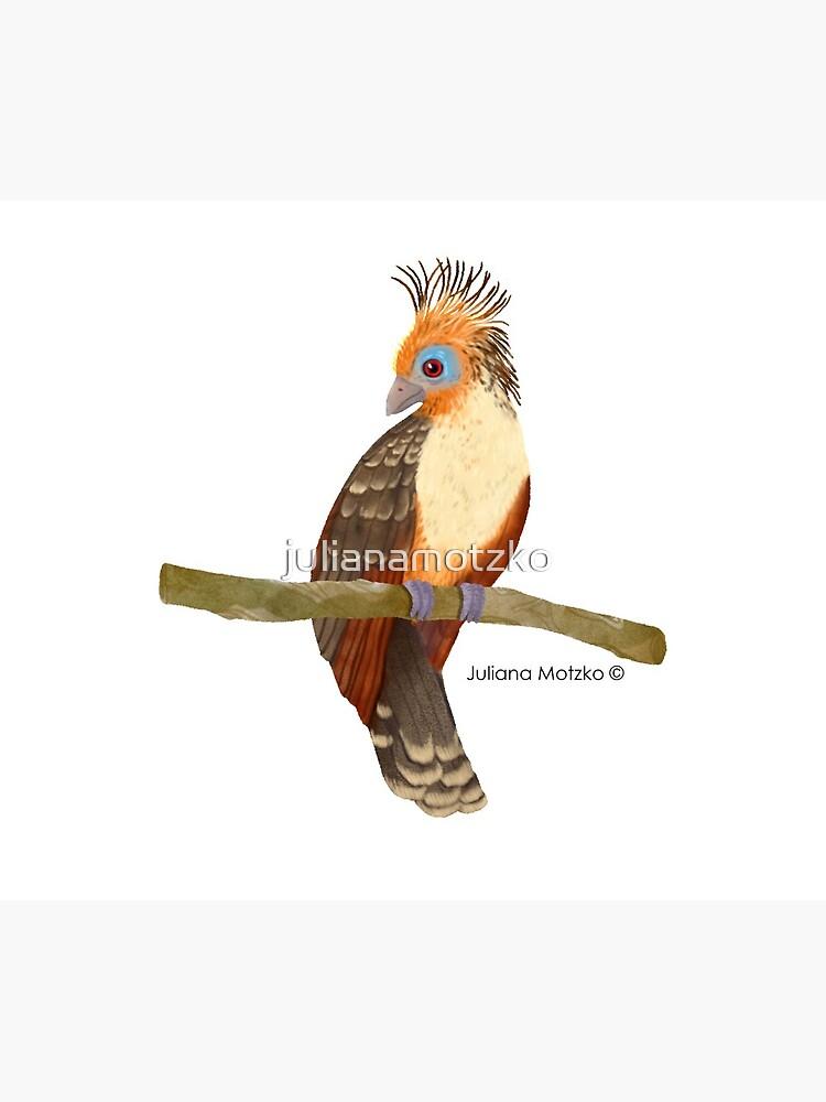 Hoatzin Bird by julianamotzko