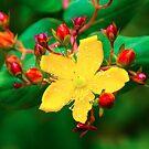 Yellow Blossom by Radek Hofman