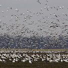 Geese Flying Down The Mississippi Flyway by WildestArt
