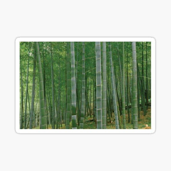 Bambusbäume in einem Wald Sticker