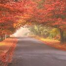 Always On My Mind - Blackheath NSW Australia - The HDR Experience by Philip Johnson