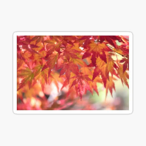 Curtain Of Autumn Leaves Sticker