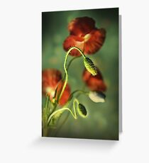 Red Poppies Impression Greeting Card