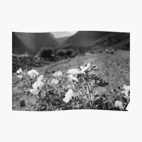Monochrome Yosemite Blooms Poster