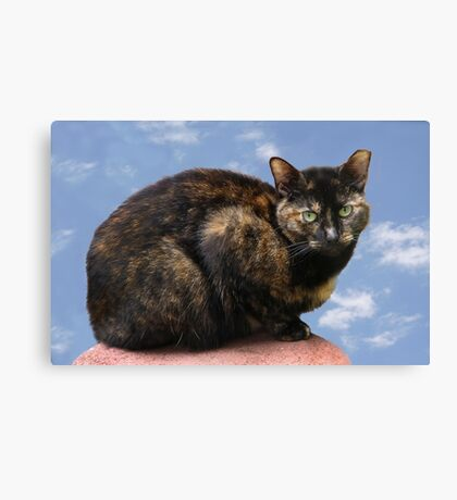Missy in the Sky Canvas Print