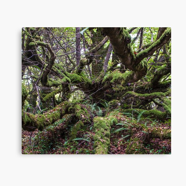 Mossy Tree Top Picture Canvas Print