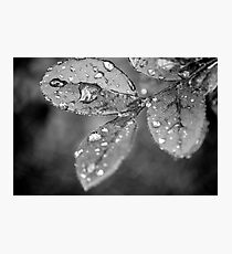 Rain Droplets Photographic Print