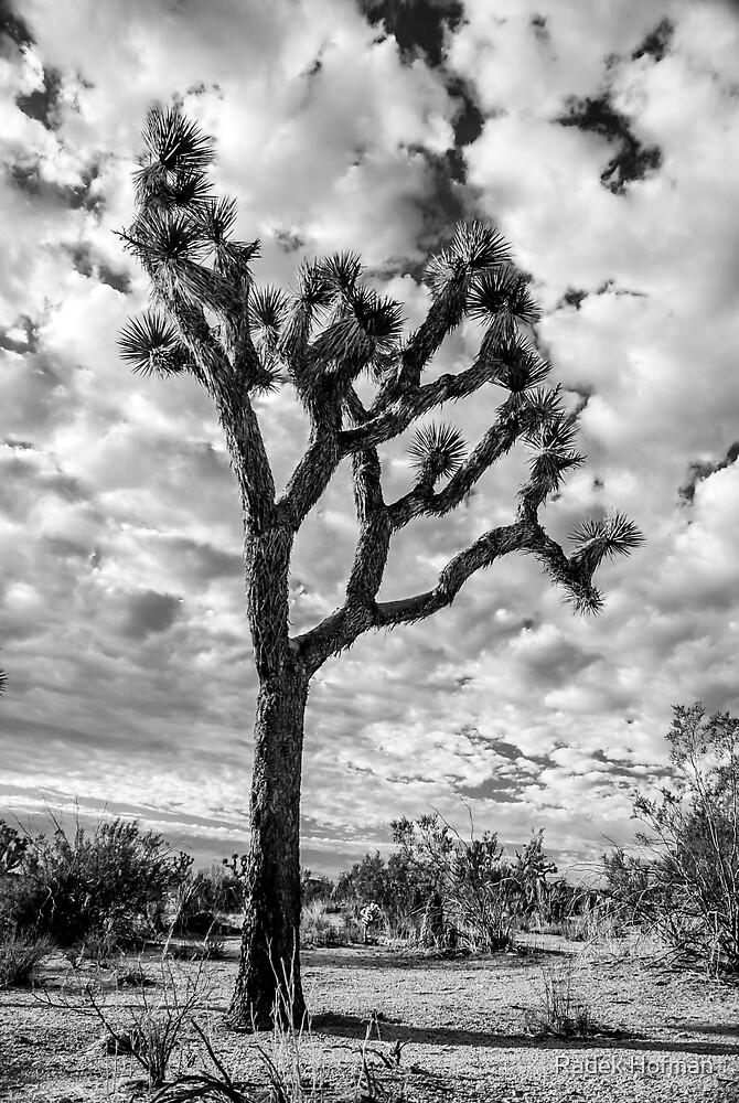 Joshua Tree by Radek Hofman