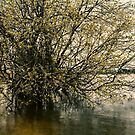 Lake Wendouree by Peter Krause