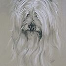 Silky Terrier by BarbBarcikKeith