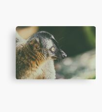 Lemur Portrait On Madagascar Island Canvas Print