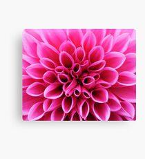 Pink Dahlia Flower Macro Canvas Print