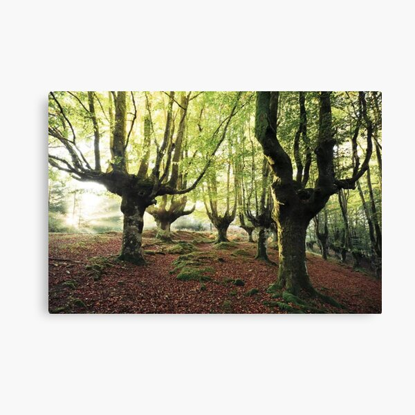 Majestic Trees Canvas Print