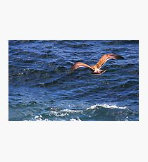 Soaring Over the Pacific Photographic Print
