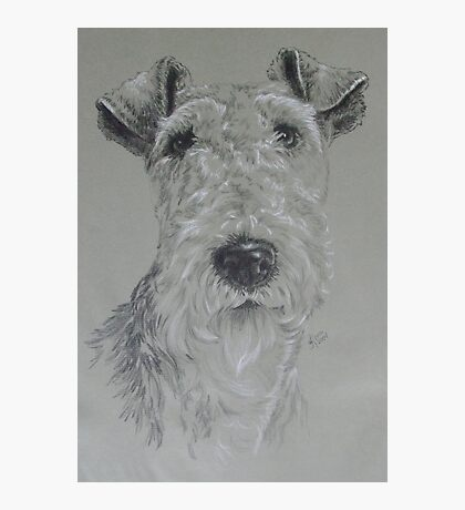 Wire-haired Fox Terrier Photographic Print