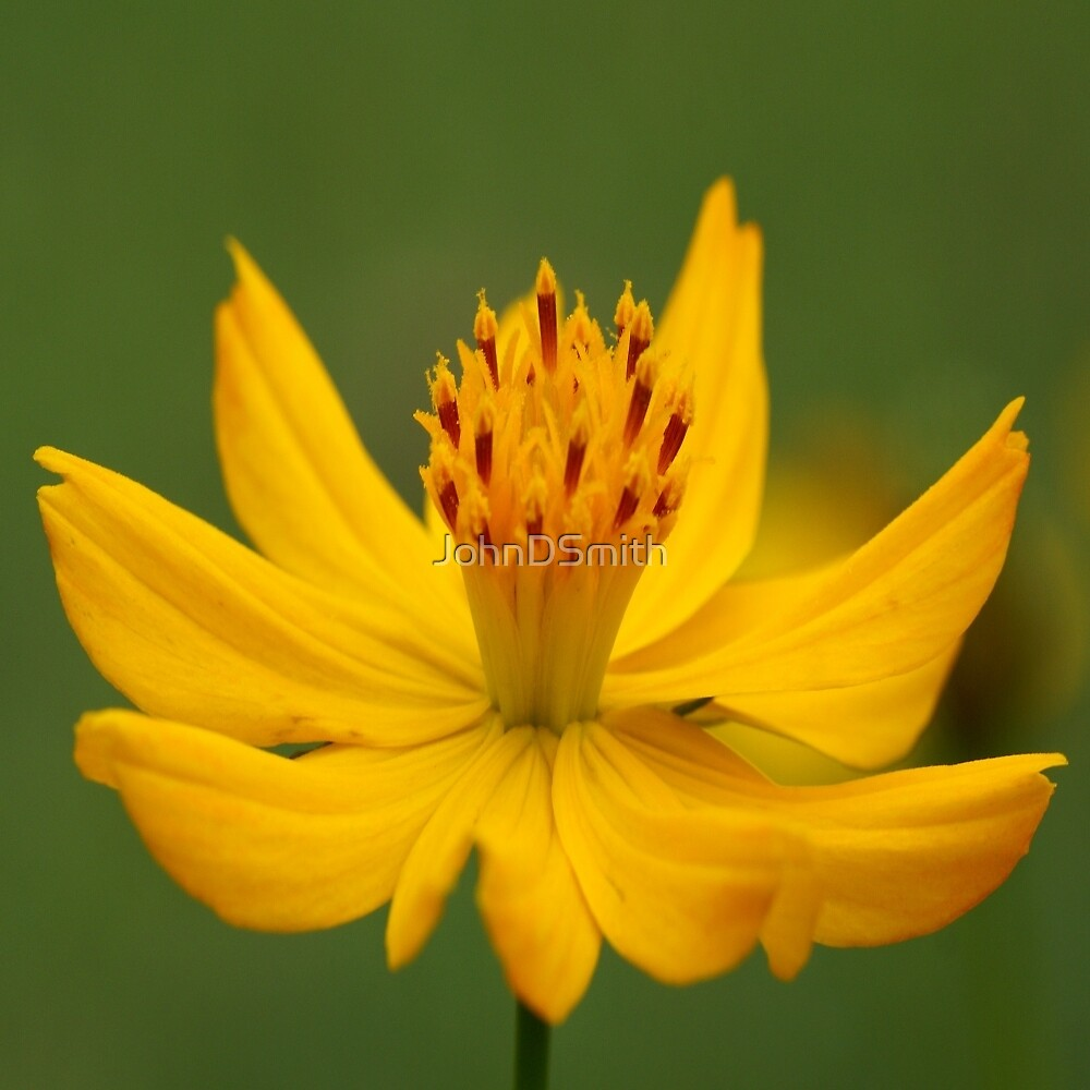 Yellow by JohnDSmith