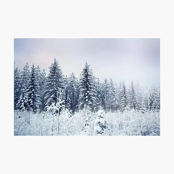 Where Christmas Trees Are Born Photographic Print
