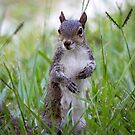Encounter with a Squirrel by Mikell Herrick