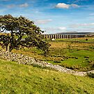 Ribblehead Viaduct by David Lewins