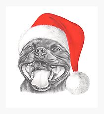 Staffie Smile Christmas - Staffordshire Bull Terrier Photographic Print
