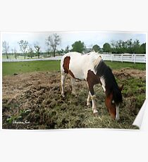 Living at the Kentucky Horse Park Poster