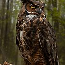 Great Horned Owl by sundawg7