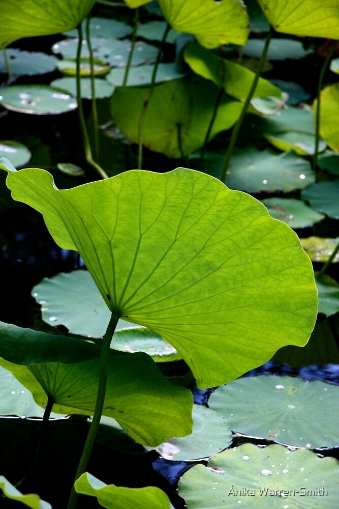 Water Lily Leaves by Ánika Warren-Smith