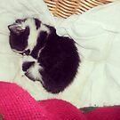 Sleep Well, Little Kitten by Charlotte Slade