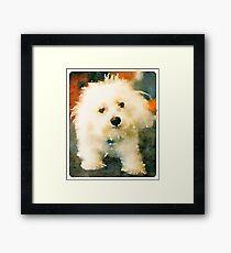 Shaggy Bichon Framed Print