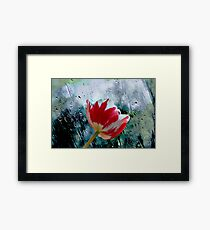 Red and White Tulip. Framed Print