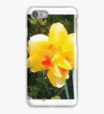 Double-bloom daffodil in the morning sun iPhone Case/Skin