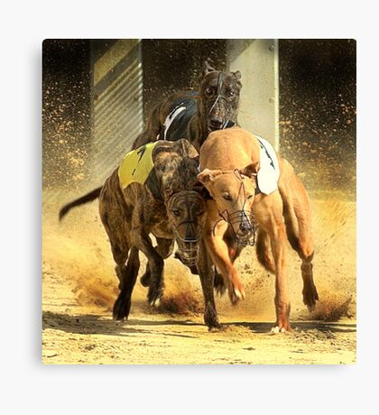 The fight to get infront Canvas Print