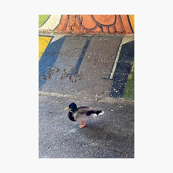 Duck Walk In The City Photographic Print
