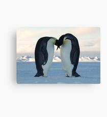Emperor Penguin Courtship Canvas Print