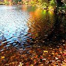 Autumn Splendor by AngieDavies