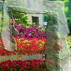 Flowers with house in Grimaud, France by Robert Elfferich