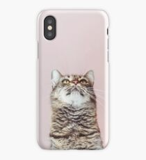 Beautiful cat looking up iPhone Case